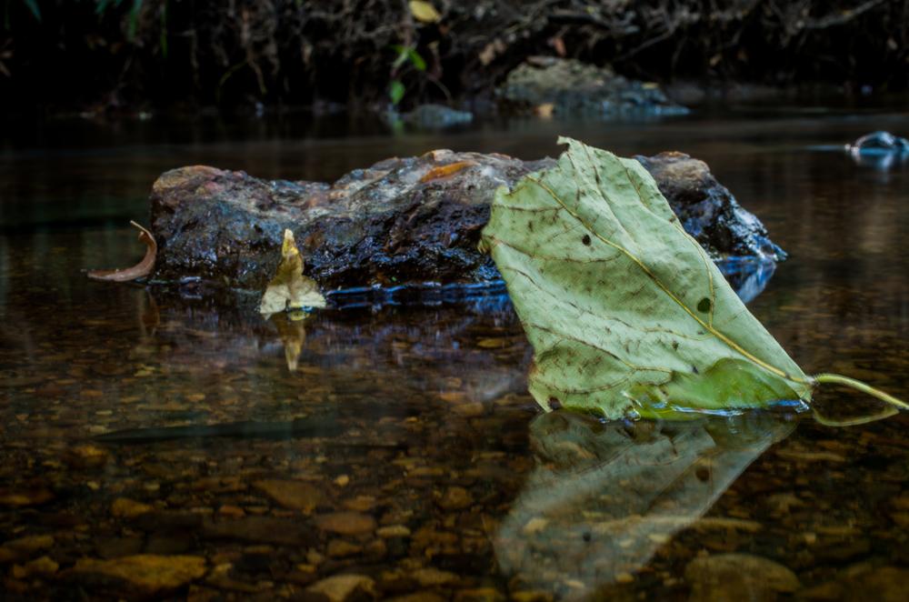 20140831-Heman Park Water-PMG_6198.jpg