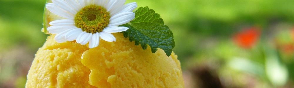 BF-sinaasappel-tijm ijs-1600x480.jpg