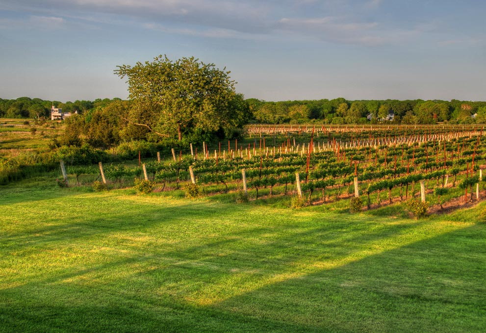 Saltwater   Farm Vineyard, Stonington, Connecticut