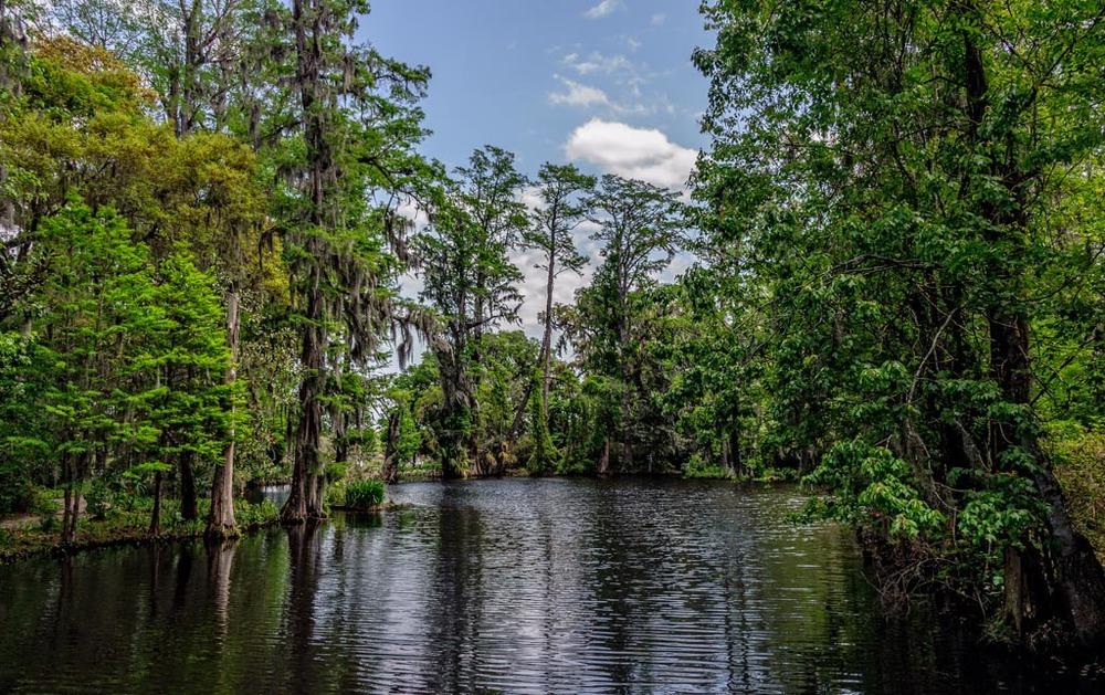 Magnolia Plantation, Charleston, South Carolina