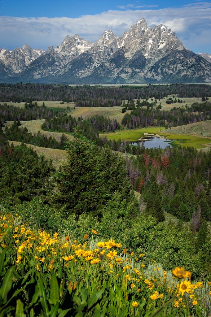 Hedrick Pond Overlook, Grand Teton National Park, Wyoming