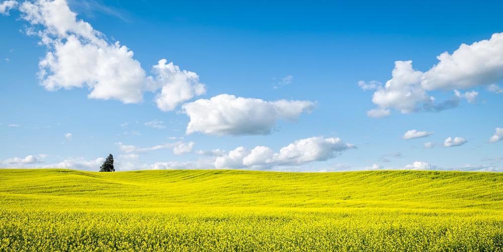 Dijon Mustard Sky