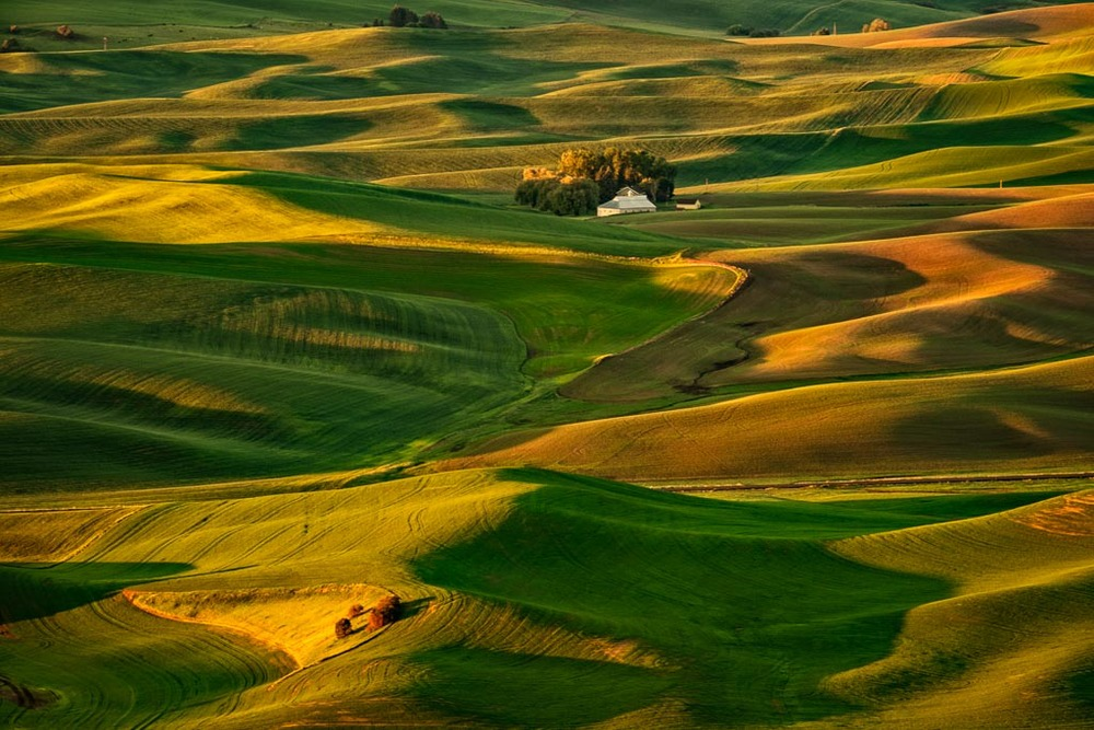 Palouse Morning