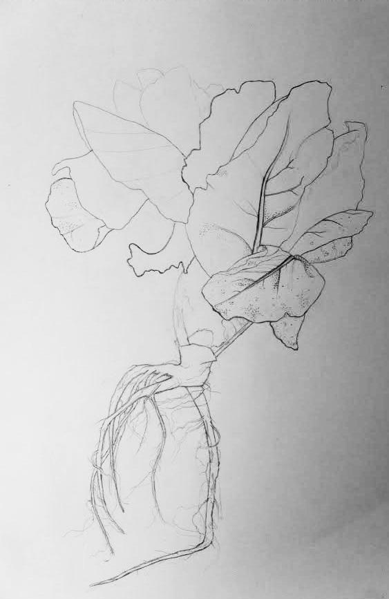 head.of.lettuce.jpg