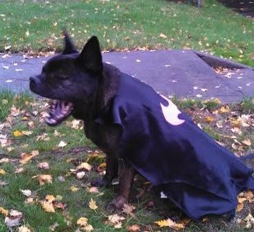 For Halloween Kira Lynn Cain