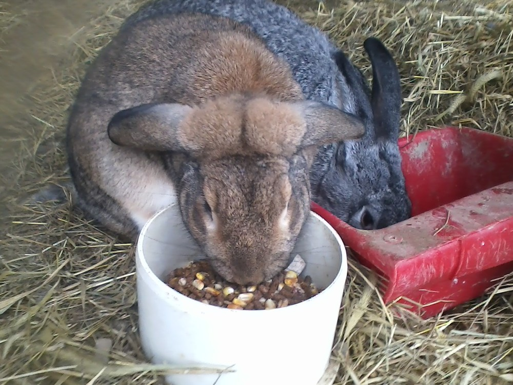 Rabbit December 2013.jpg