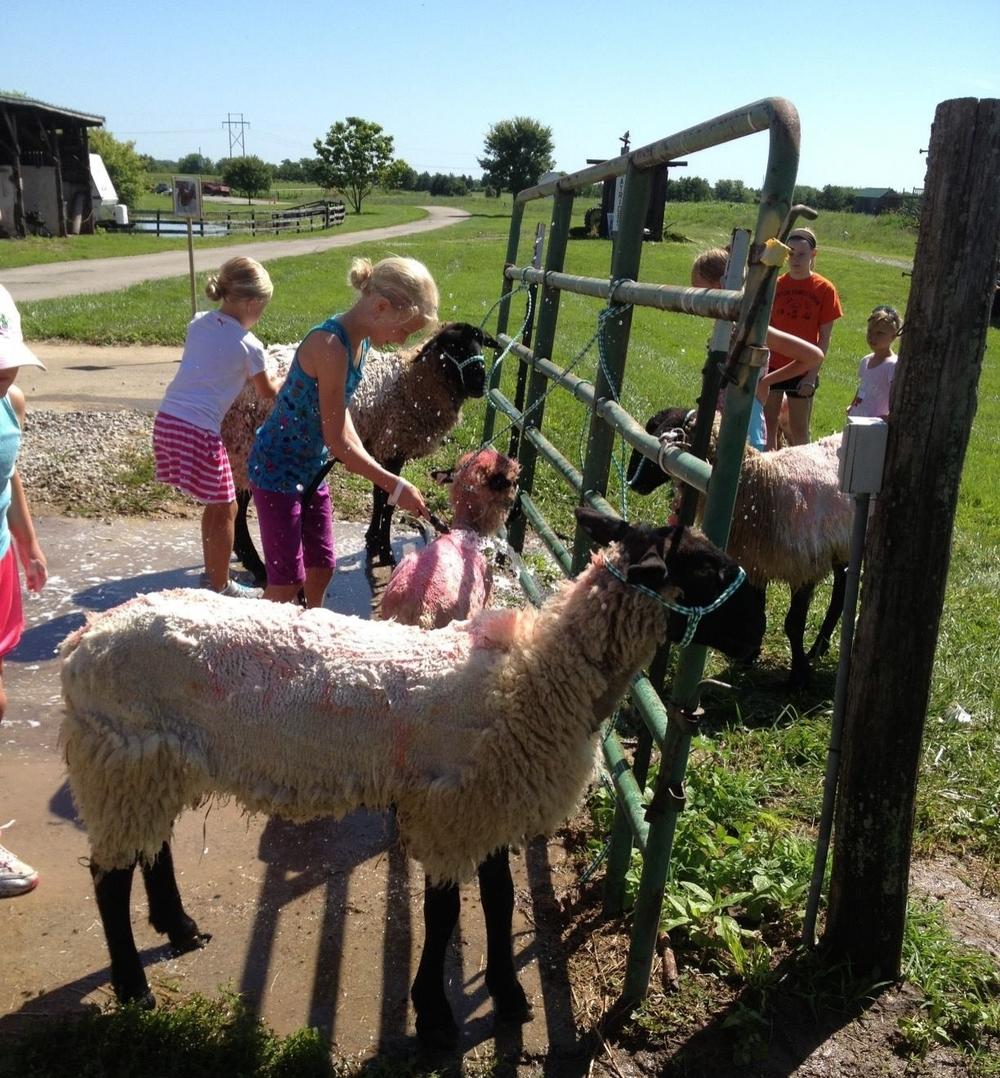 Farm Camp 1.jpg