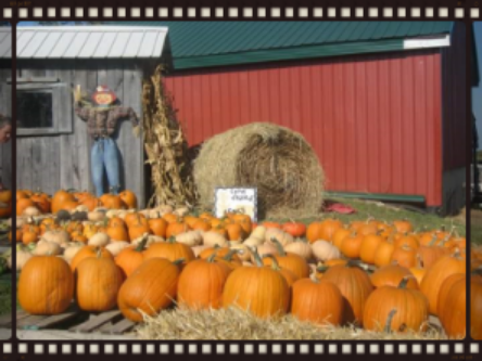 Pumpkins already picked or if over ten people we can take you on hayride to field! $7 person with hayride 3 years under always FREE on weekends at Benton Farms!