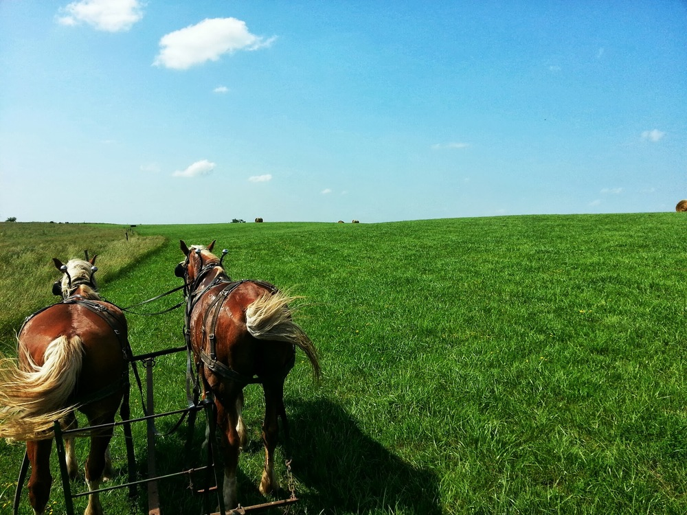 Amish Paradise