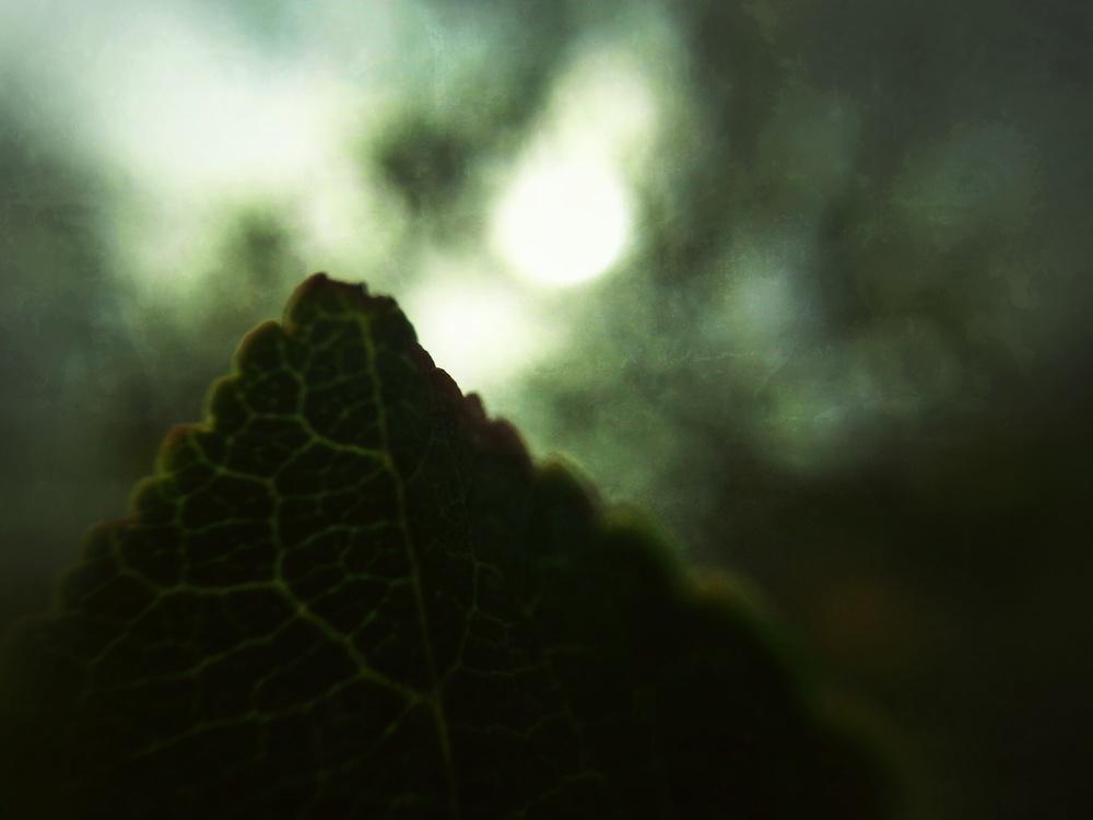 Mt. Leaf