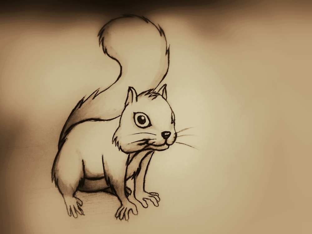 Squirrel illustration by Derek Mit