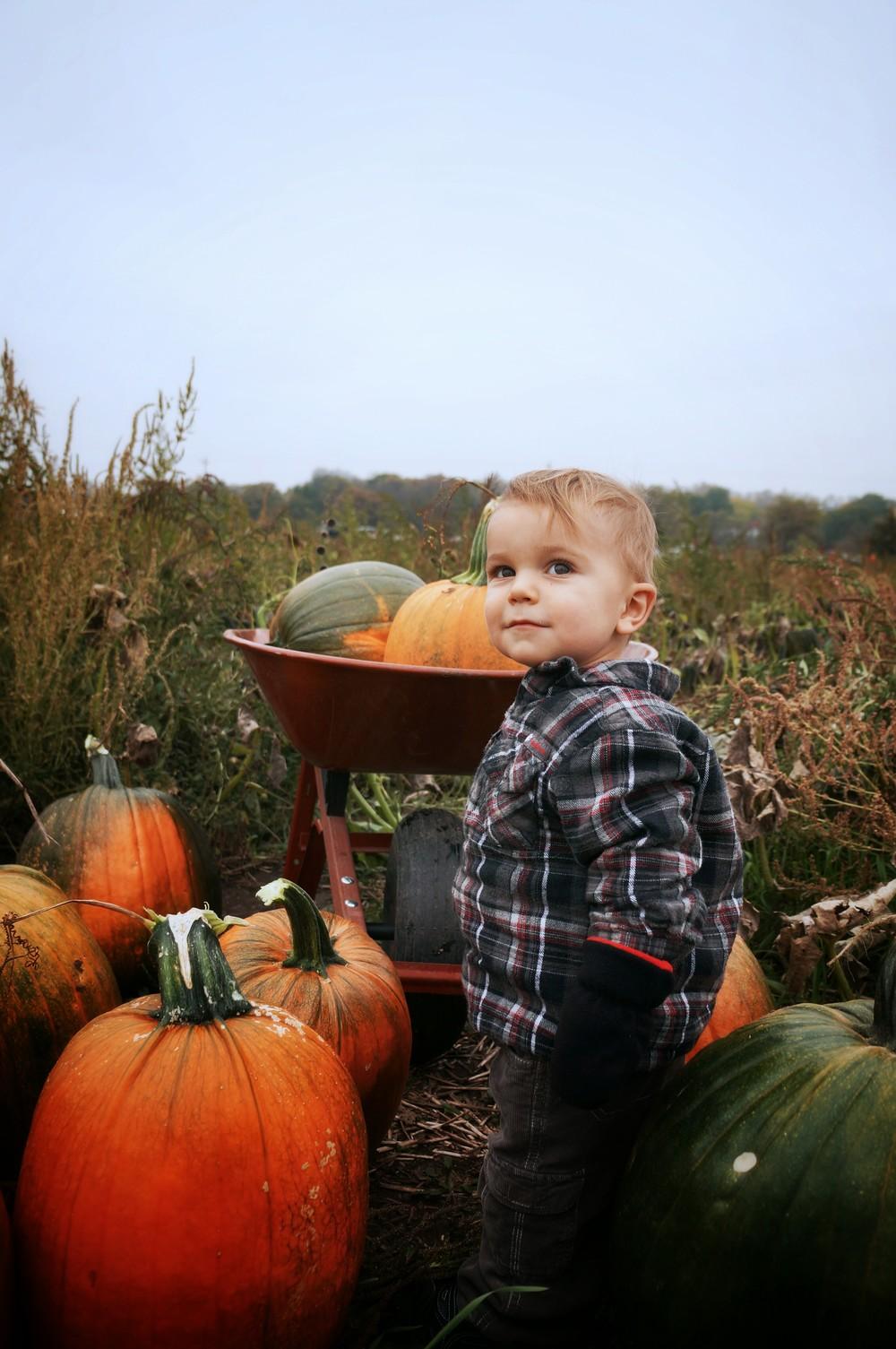 Ryker proud of his pumpkin haul