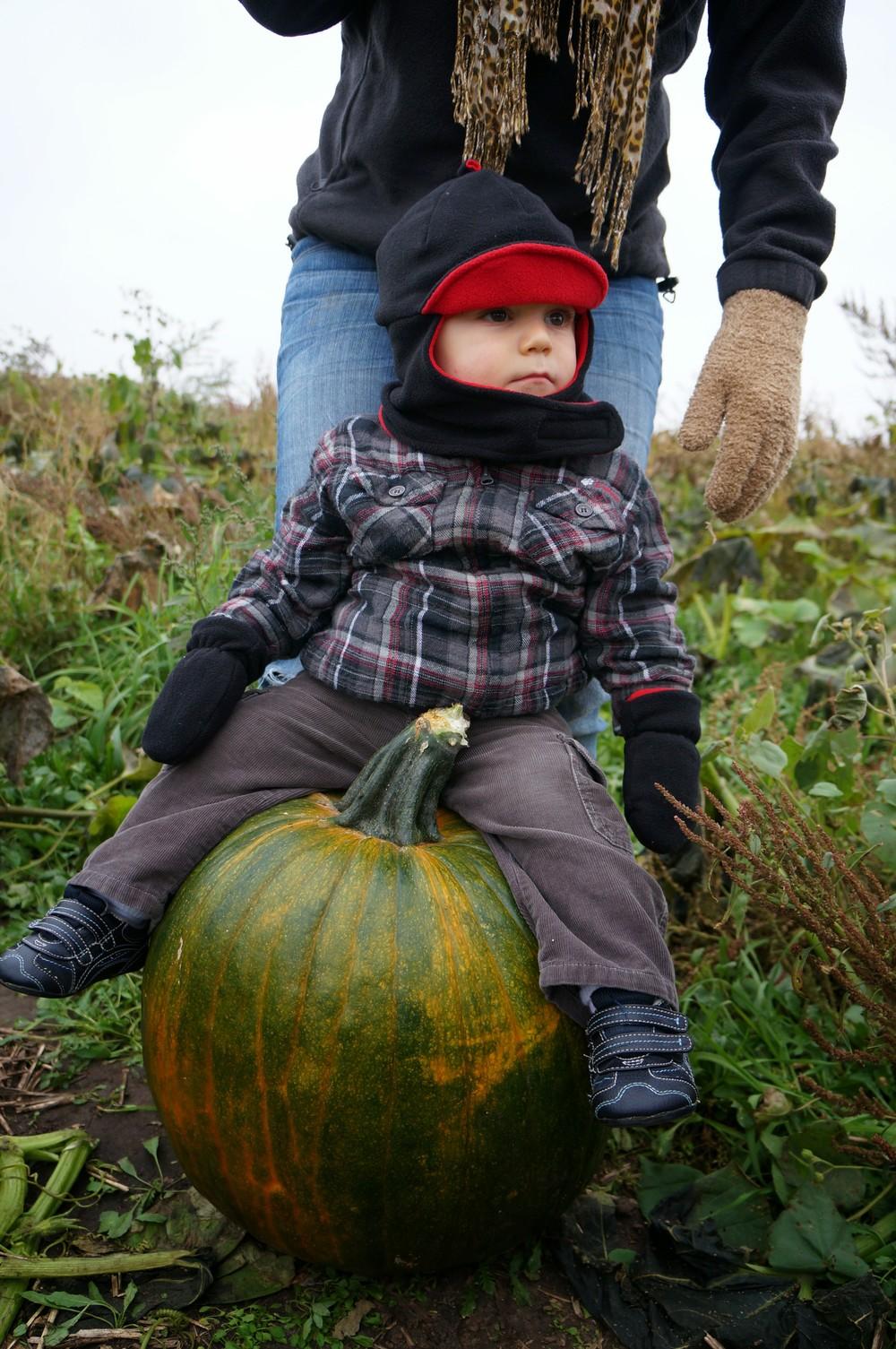 Ryker riding a pumpkin