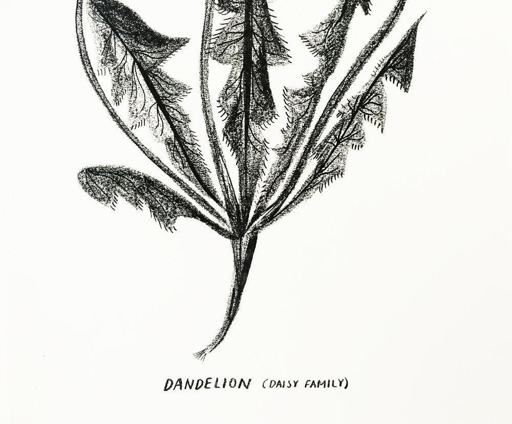 dandelion zoomed in .jpg