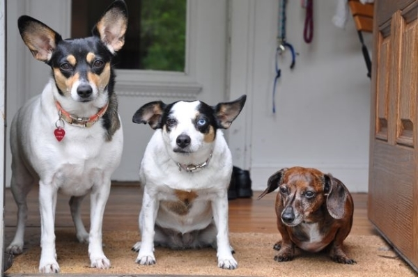 "In case you're wondering, the ""three"" in threedog are my rescued dogs and muses: Fern, Minnie and Ladybug, pictured above."