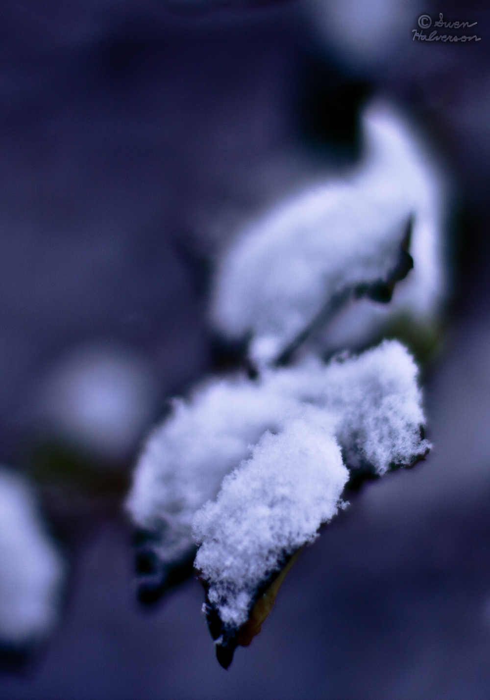 Theme: Cold  <br>Title: Snow Leaf