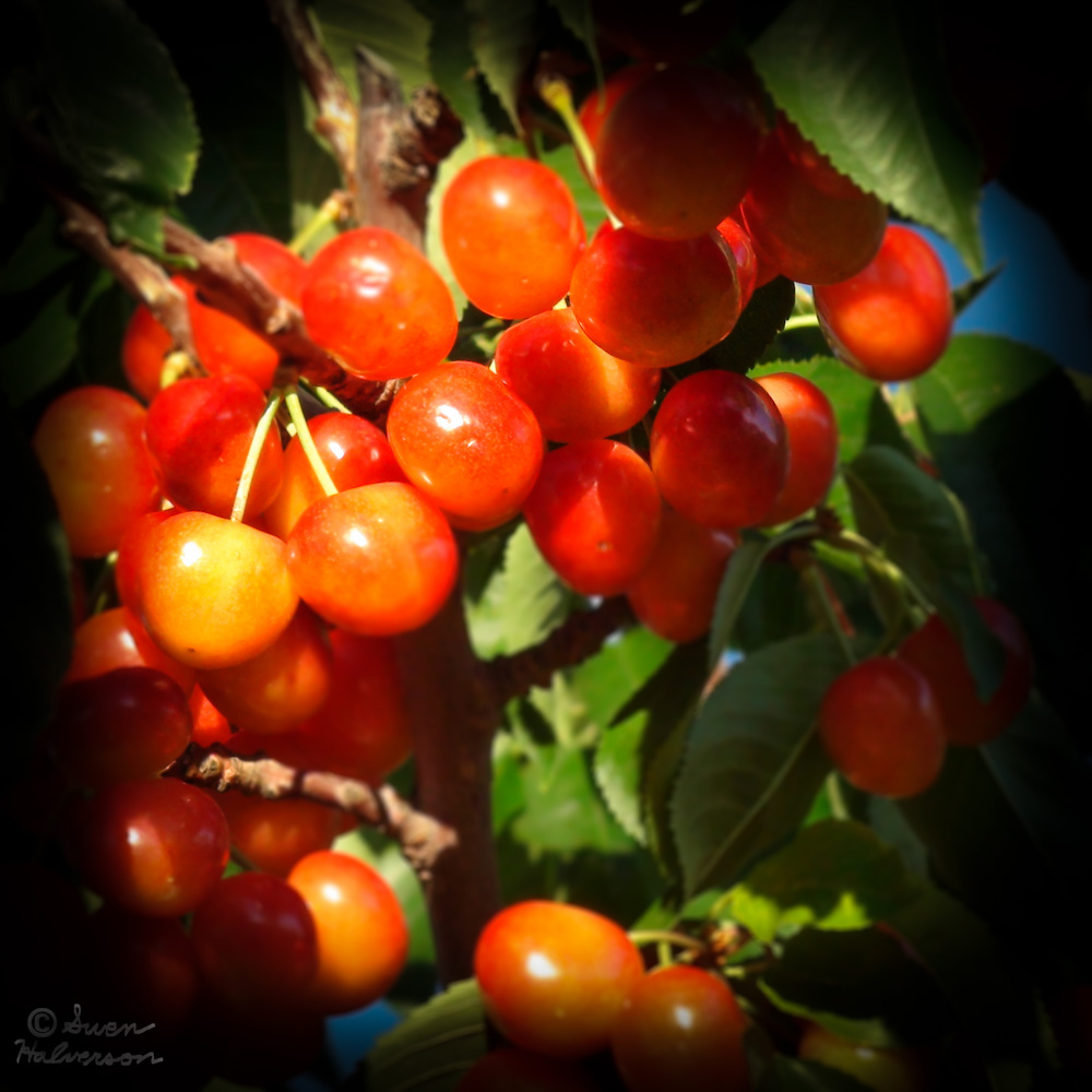 Theme: Bubble, Droplet, Sphere, Balloon, Etc... <br>Title: Cherries