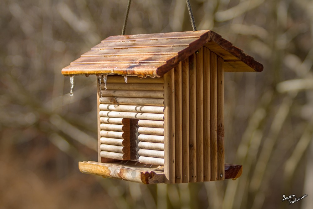 Theme: Melted | Title: Icicles On The Bird House