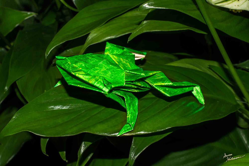 Theme: Origami | Title: Paper Frog