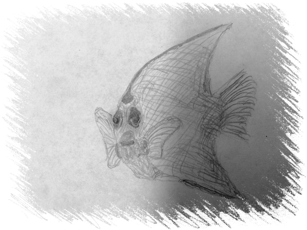 Theme: Fish | Title: Angelfish Drawing