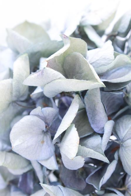 hydrangea via netherleigh.co