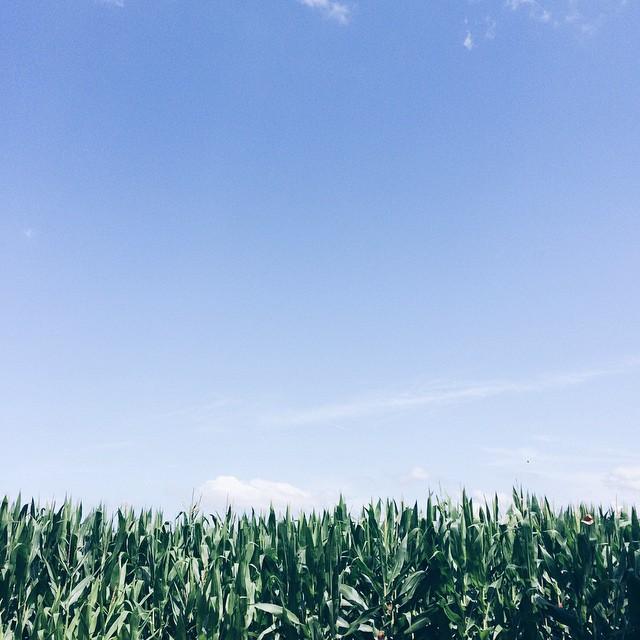 blue sky day.jpg