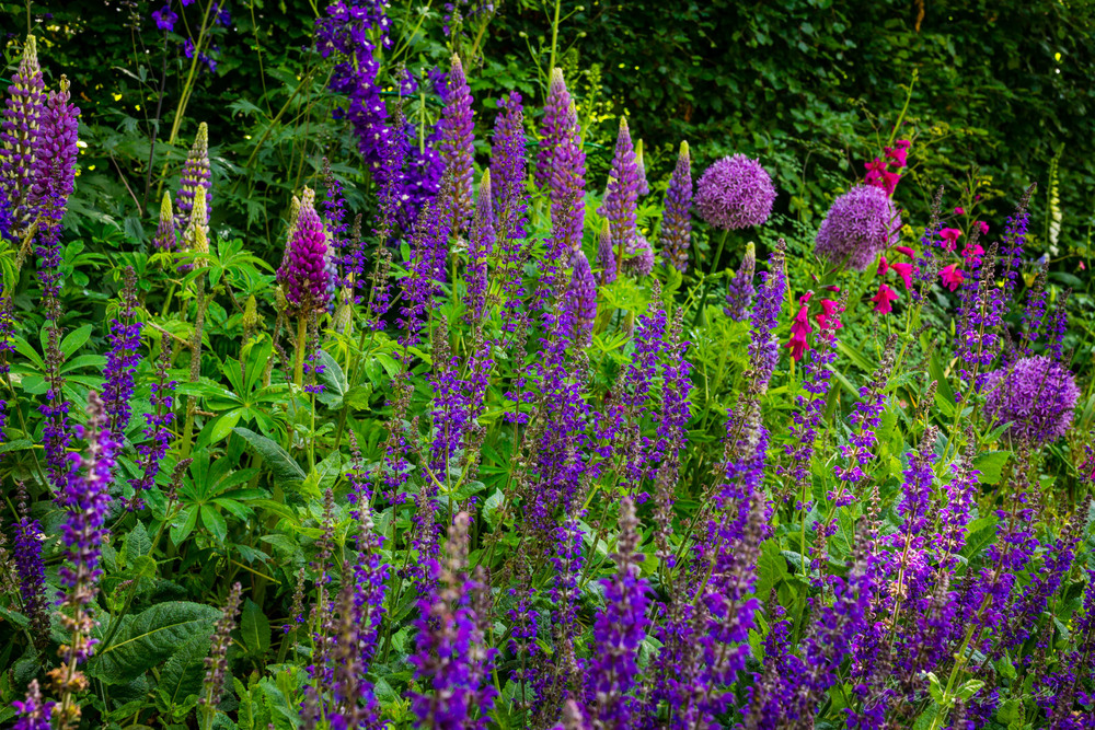 Summer-Flowers-10.jpg