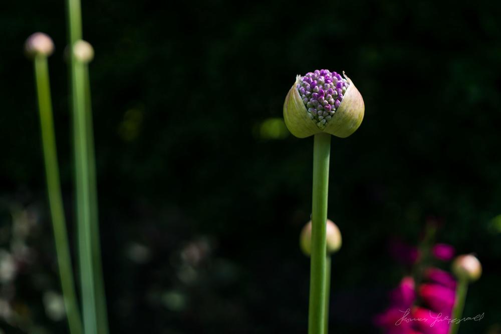 Summer-Flowers-06.jpg