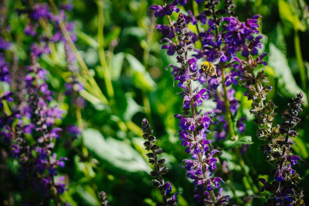 Summer-Flowers-05.jpg