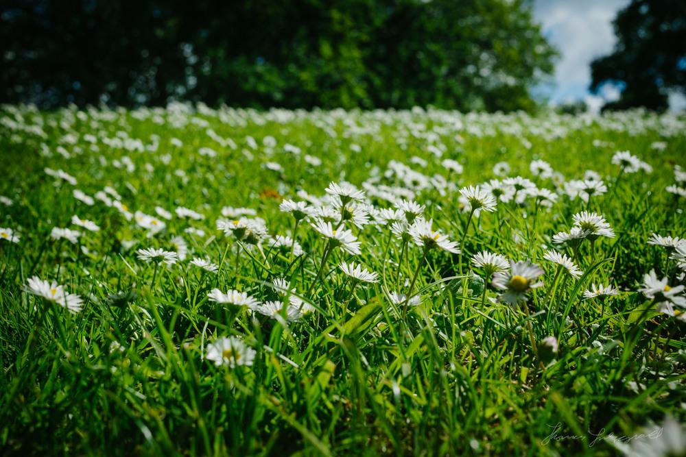 Summer-Flowers-03.jpg
