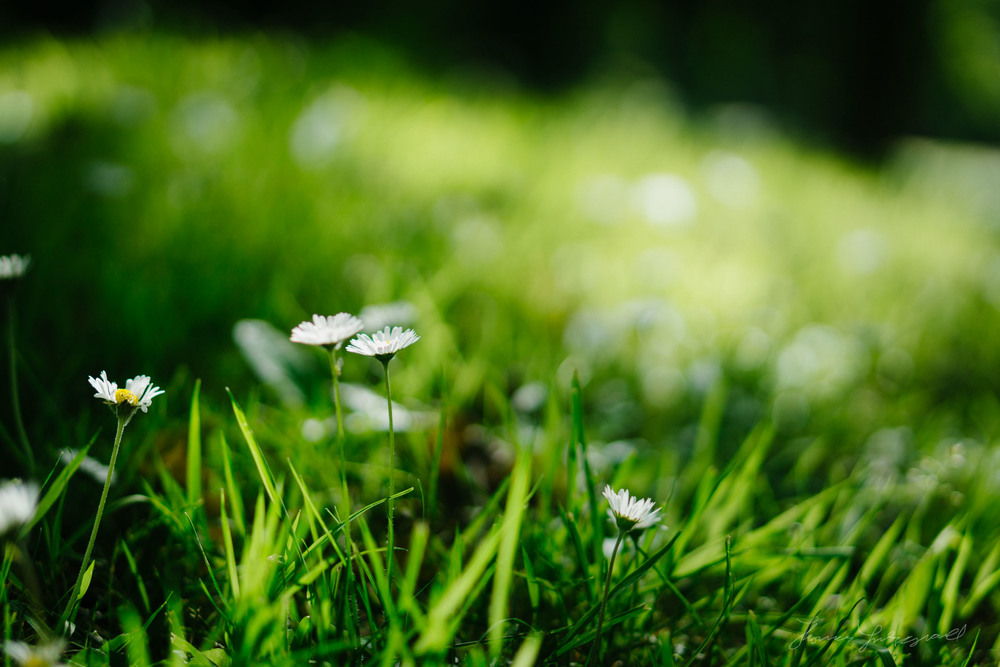 Summer-Flowers-01.jpg