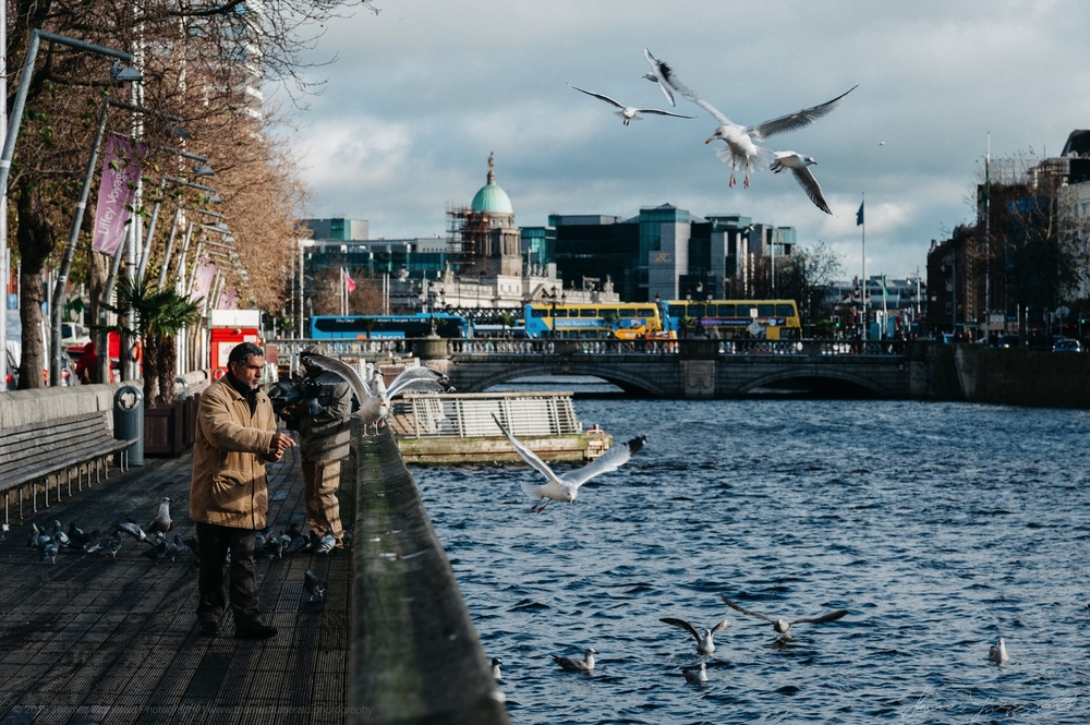 Feeding the birds on the boardwalk in Dublin City
