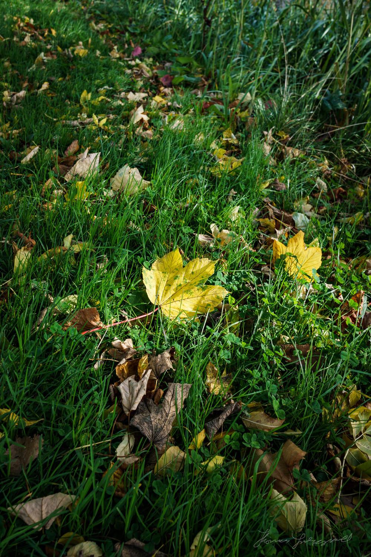 Autumn-Dublin-Sony-A6000-71.jpg