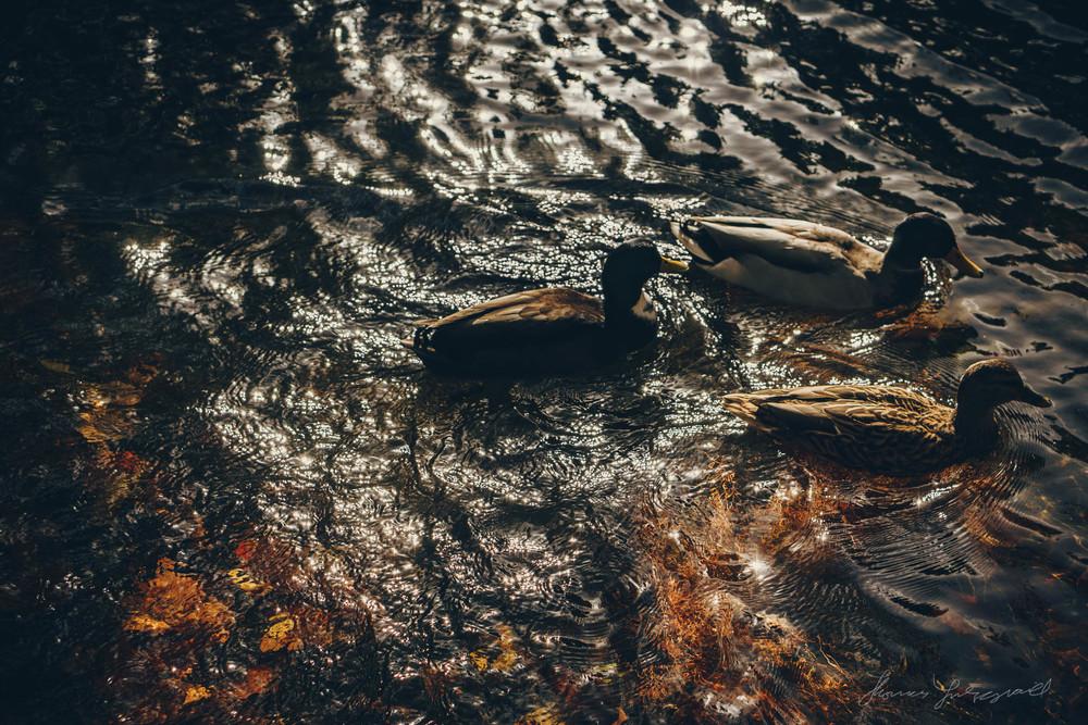 Autumn-Dublin-Sony-A6000-66.jpg