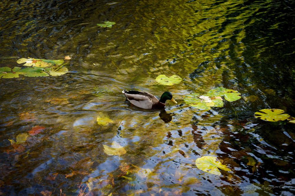 Autumn-Dublin-Sony-A6000-61.jpg