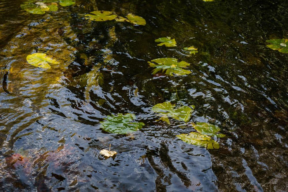 Autumn-Dublin-Sony-A6000-59.jpg