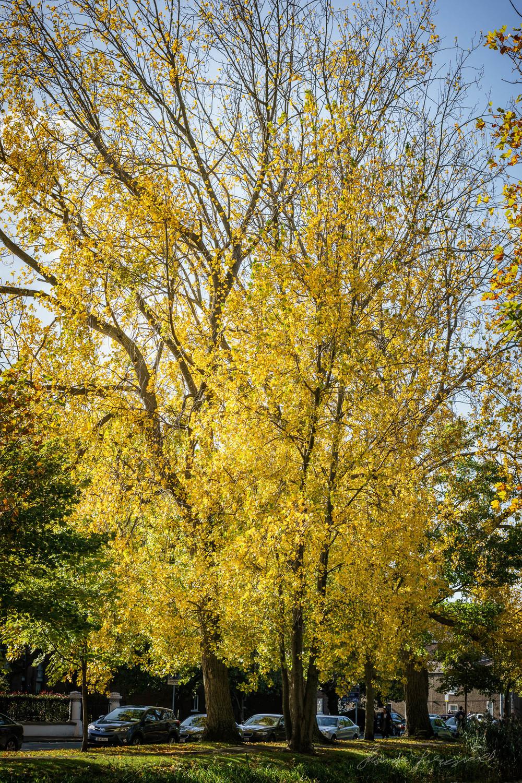 Autumn-Dublin-Sony-A6000-56.jpg