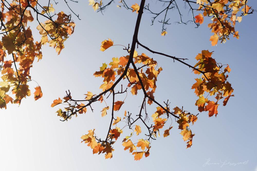 Autumn-Dublin-Sony-A6000-51.jpg