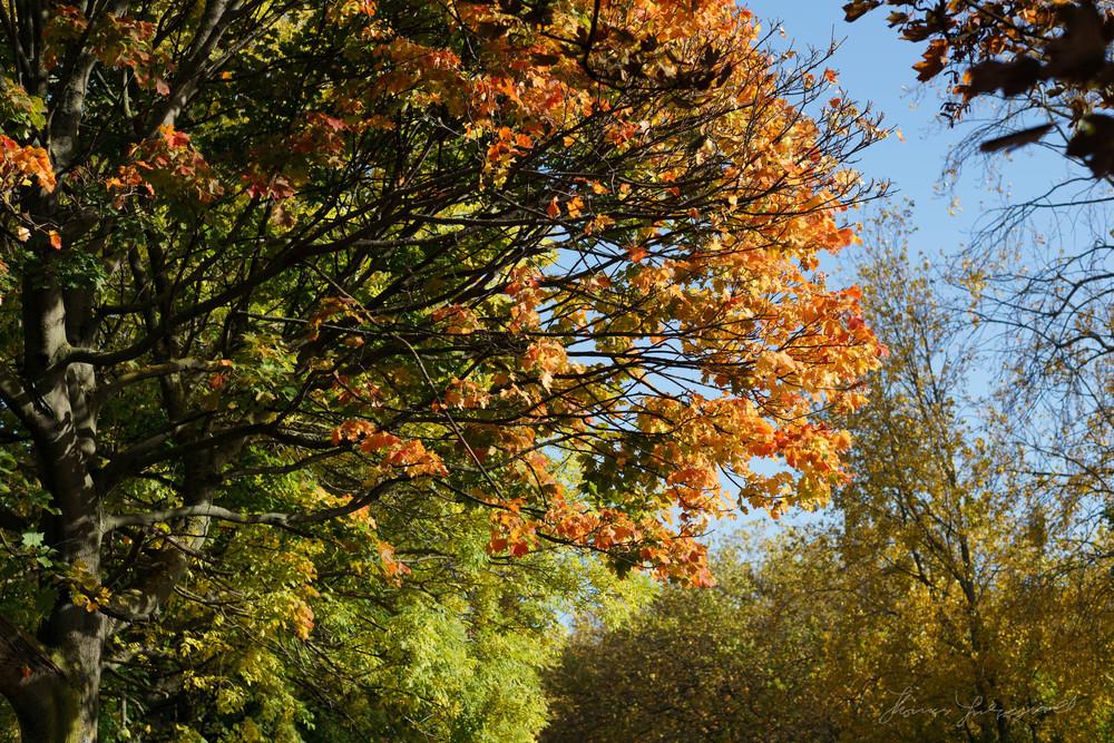 Autumn-Dublin-Sony-A6000-50.jpg