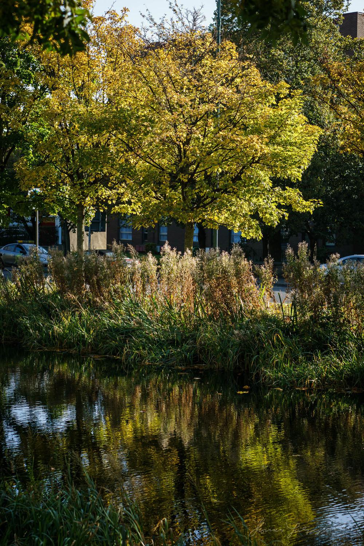 Autumn-Dublin-Sony-A6000-46.jpg
