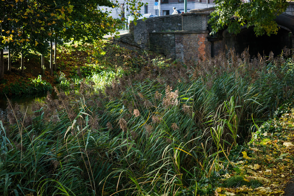 Autumn-Dublin-Sony-A6000-45.jpg