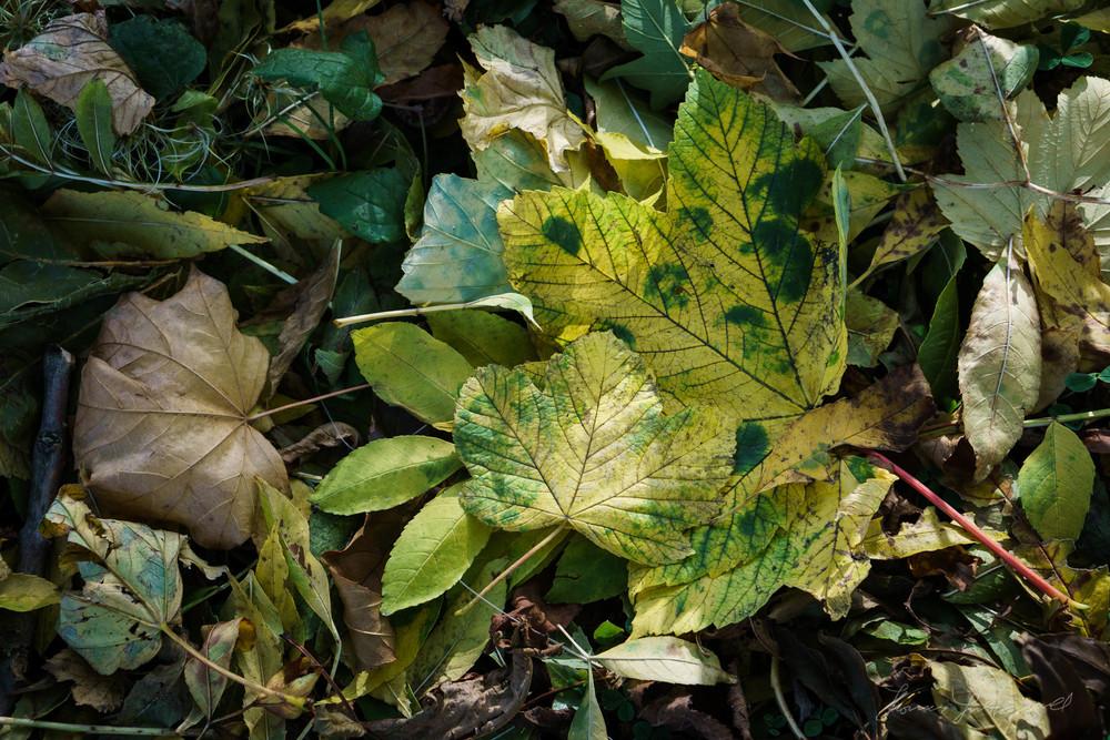Autumn-Dublin-Sony-A6000-44.jpg