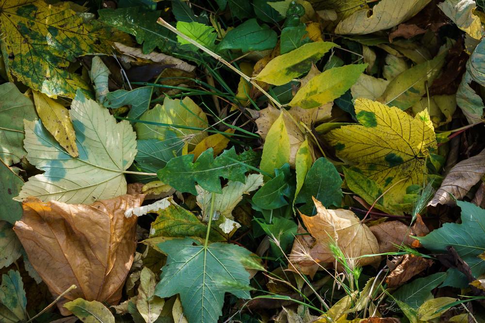 Autumn-Dublin-Sony-A6000-43.jpg
