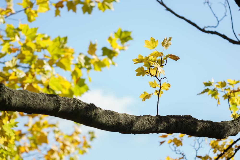 Autumn-Dublin-Sony-A6000-35.jpg