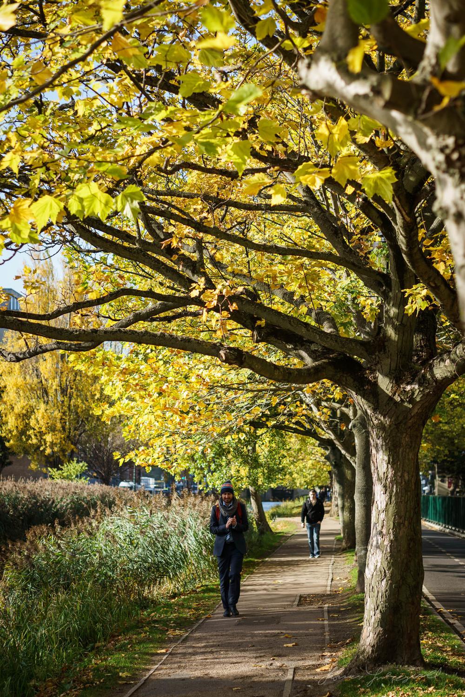 Autumn-Dublin-Sony-A6000-36.jpg