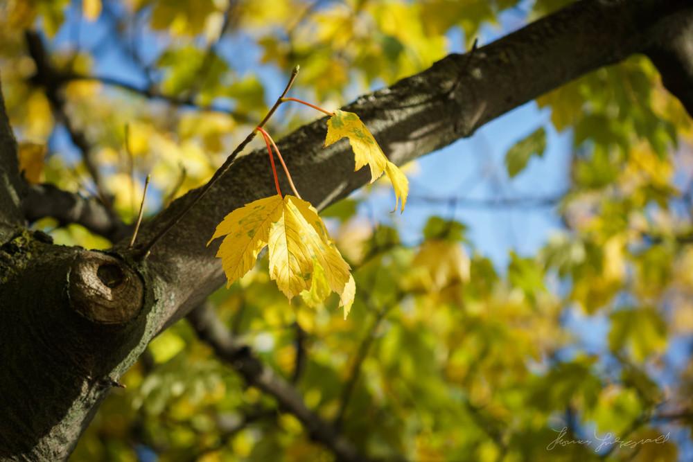 Autumn-Dublin-Sony-A6000-34.jpg