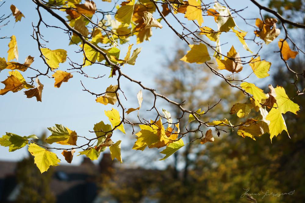 Autumn-Dublin-Sony-A6000-32.jpg