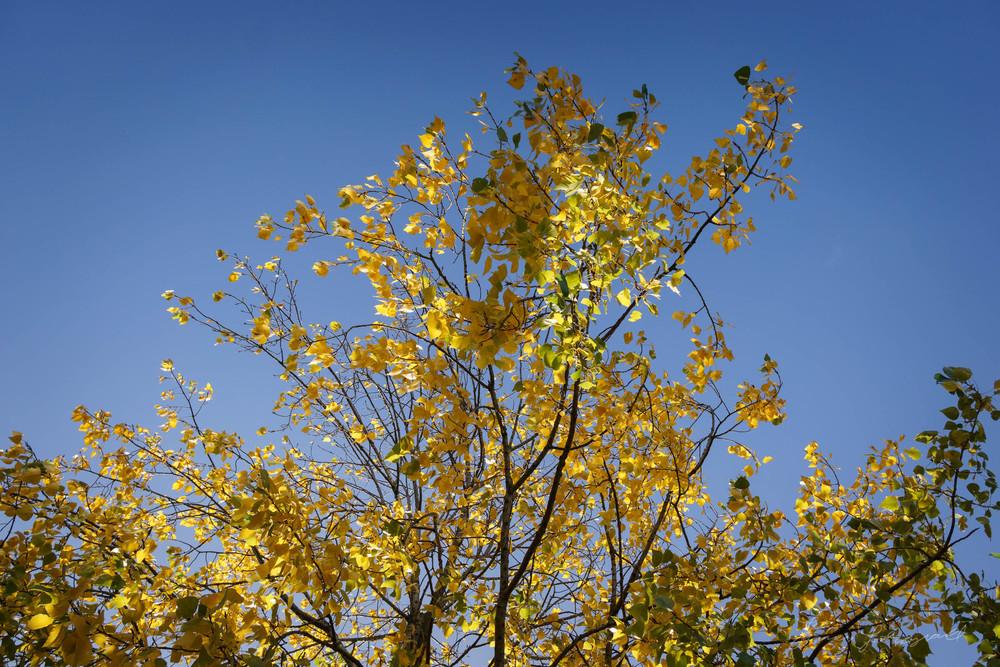Autumn-Dublin-Sony-A6000-30.jpg