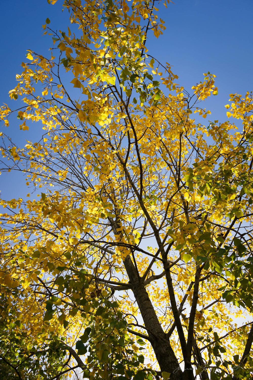 Autumn-Dublin-Sony-A6000-29.jpg