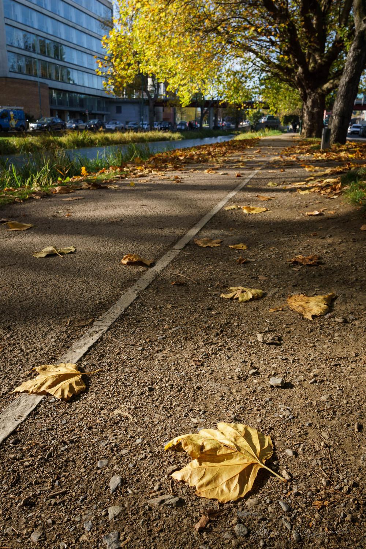 Autumn-Dublin-Sony-A6000-26.jpg